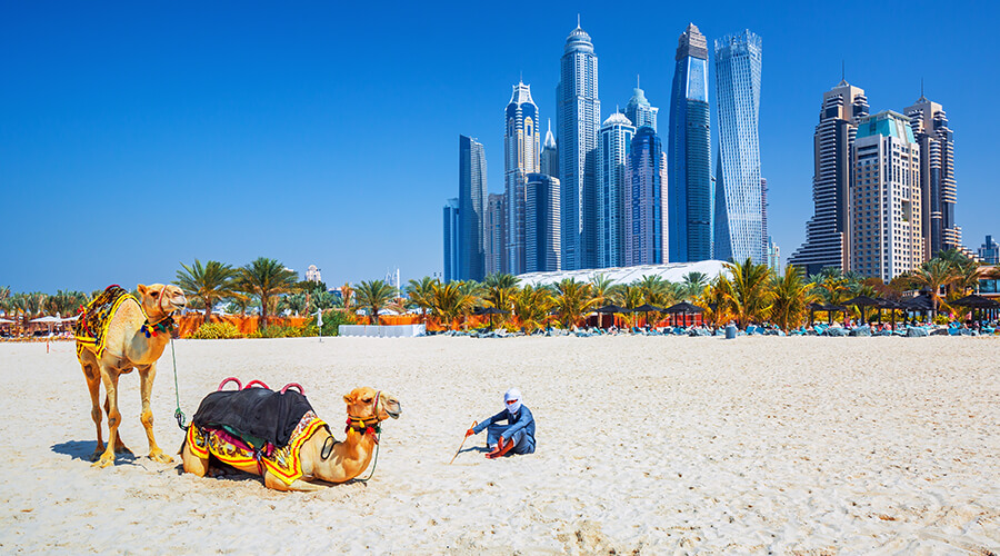 man on beach with camels in Dubai
